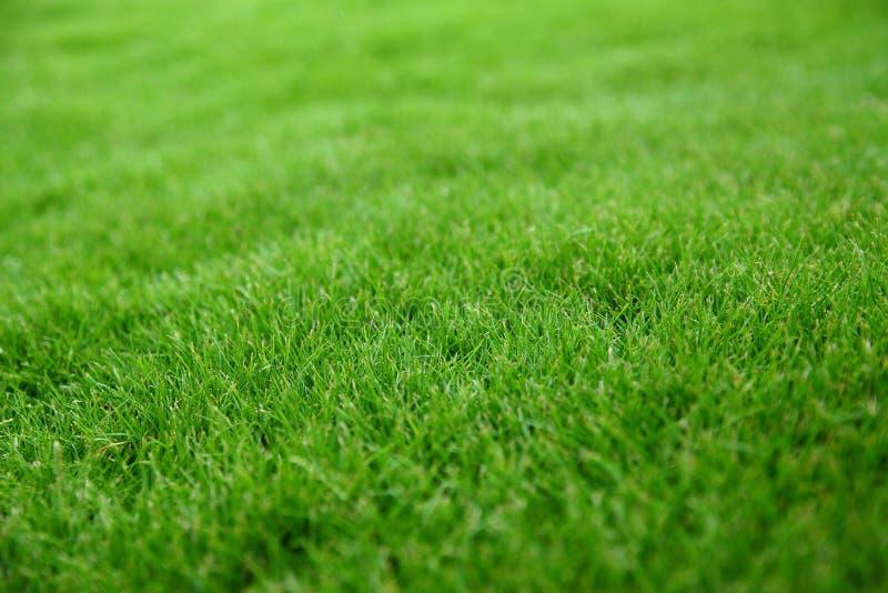 зеленый цвет травы стоковые изображения