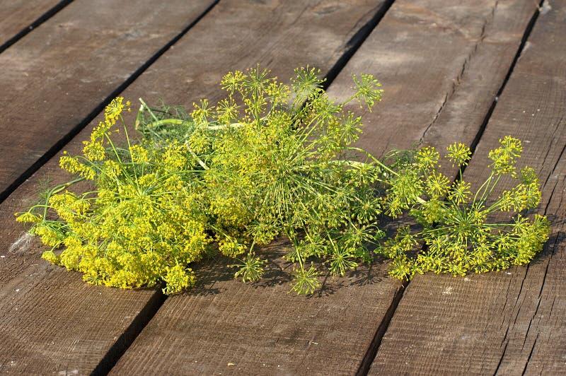 зеленый цвет укропа пука стоковая фотография rf