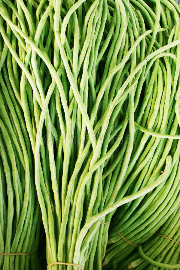 зеленый цвет фасоли стоковое изображение