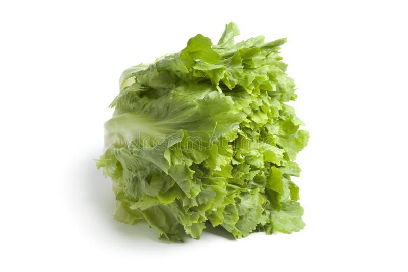 зеленый цвет эндивия свежий стоковое изображение rf