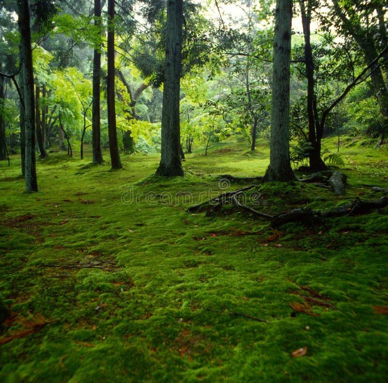Download зеленый цвет стоковое изображение. изображение насчитывающей заволакивание - 484149