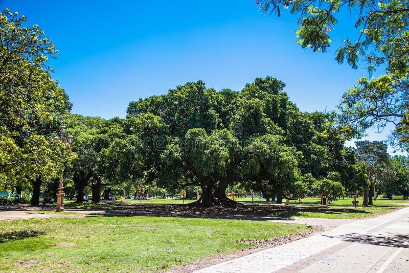 Зеленый цвет 3 Beautifu в парке на площади Dante, Bueno Aires Argentia стоковые изображения