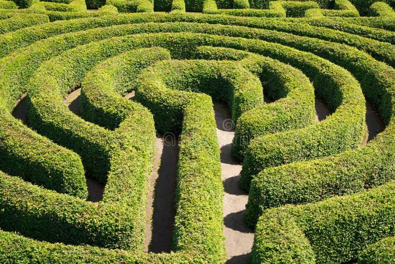 Зеленый цвет bushes лабиринт стоковое фото rf