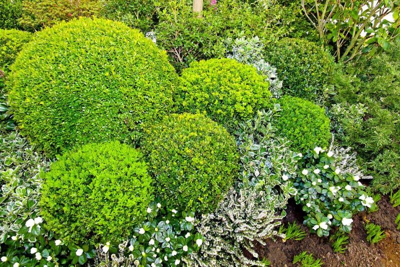 зеленый цвет bushes стоковые фото