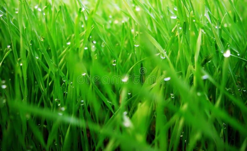 зеленый цвет gras стоковые фото