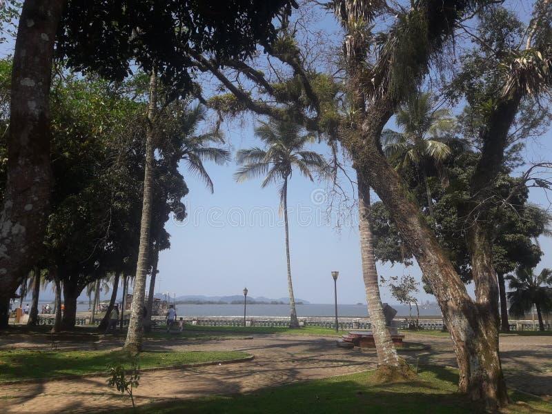 Зеленый цвет Paisagem устанавливает красивые деревья ландшафта стоковые фотографии rf