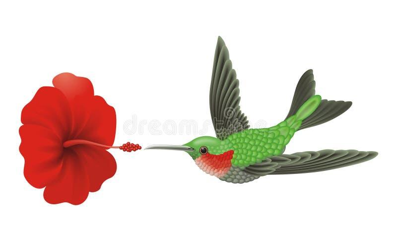 зеленый hummingbird иллюстрация вектора