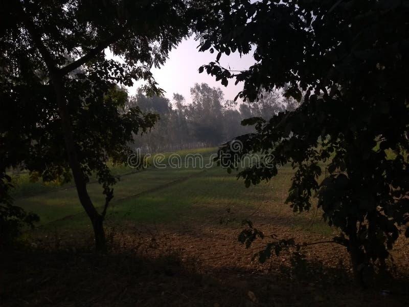 зеленый lush ландшафта стоковые изображения rf