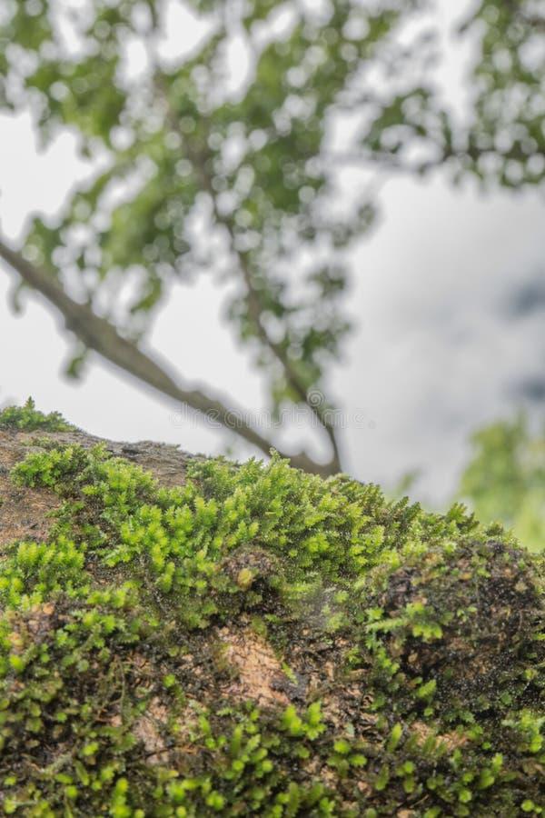 Зеленый mos стоковое изображение rf
