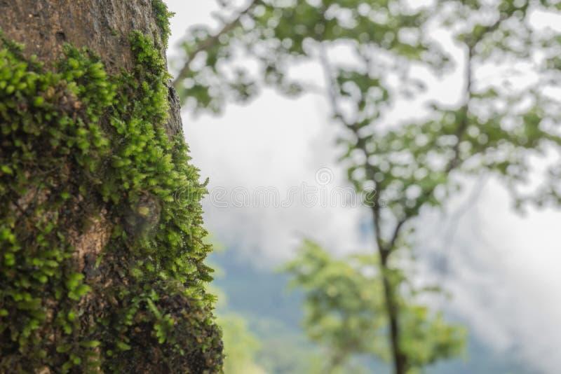 Зеленый mos стоковые изображения rf