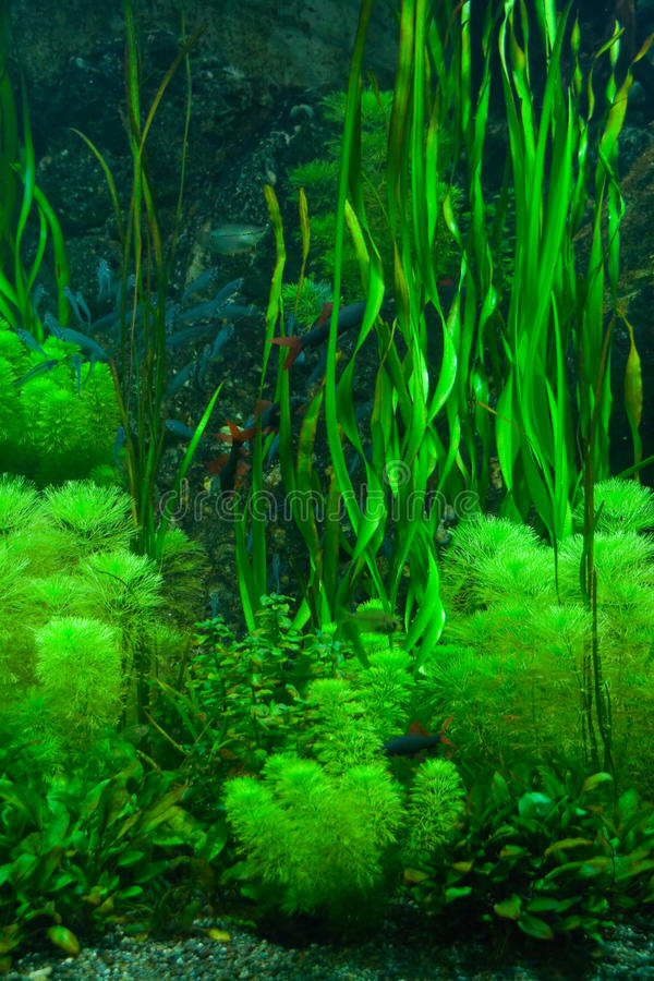 зеленый seaweed стоковое фото