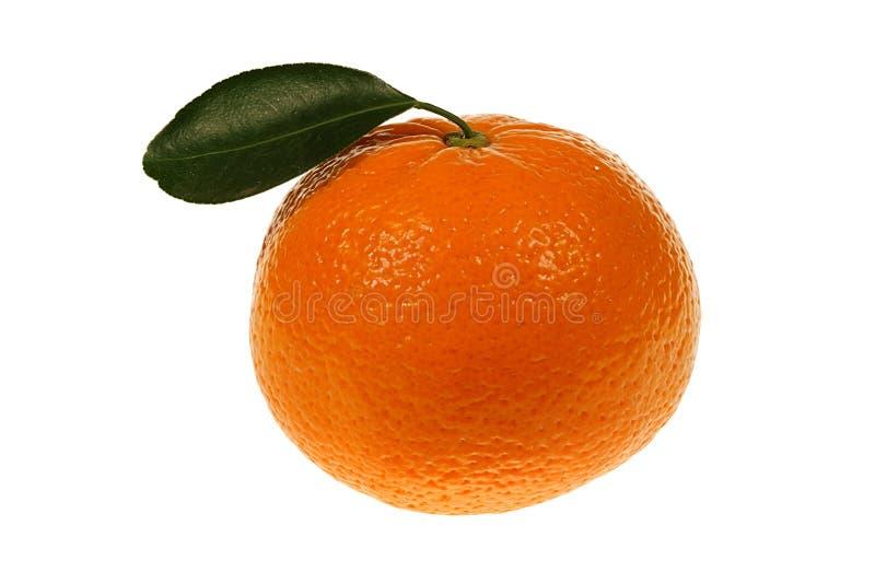 зеленый tangerine листьев стоковая фотография