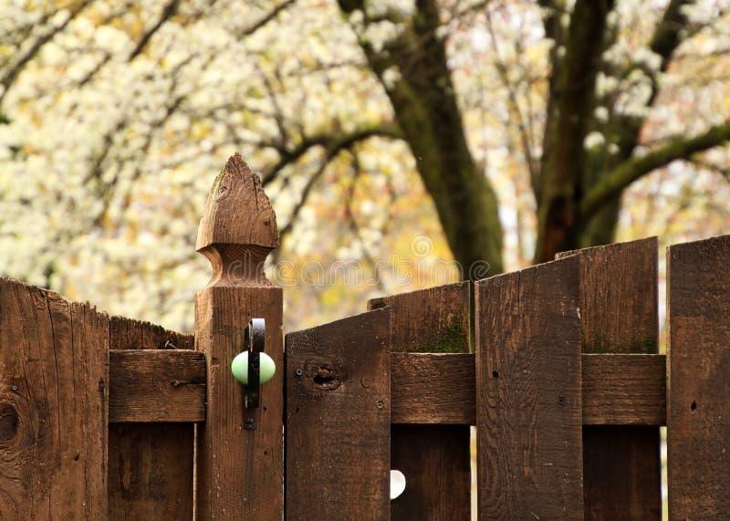 Зелен-покрашенное пасхальное яйцо спрятано в крюке плантатора стоковое изображение