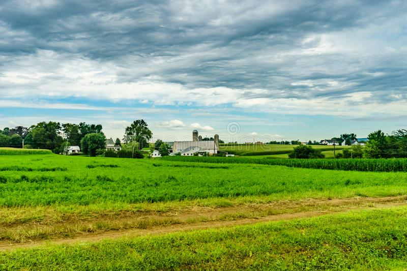 Земледелие поля амбара фермы страны Амишей и коровы пасти в Ланкастере, PA стоковые изображения