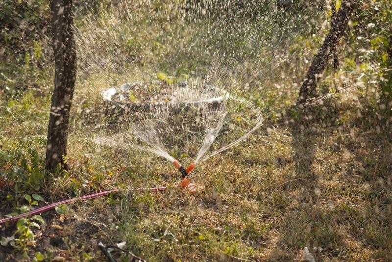 Земледелие - система Irigation в саде на лете стоковые фотографии rf