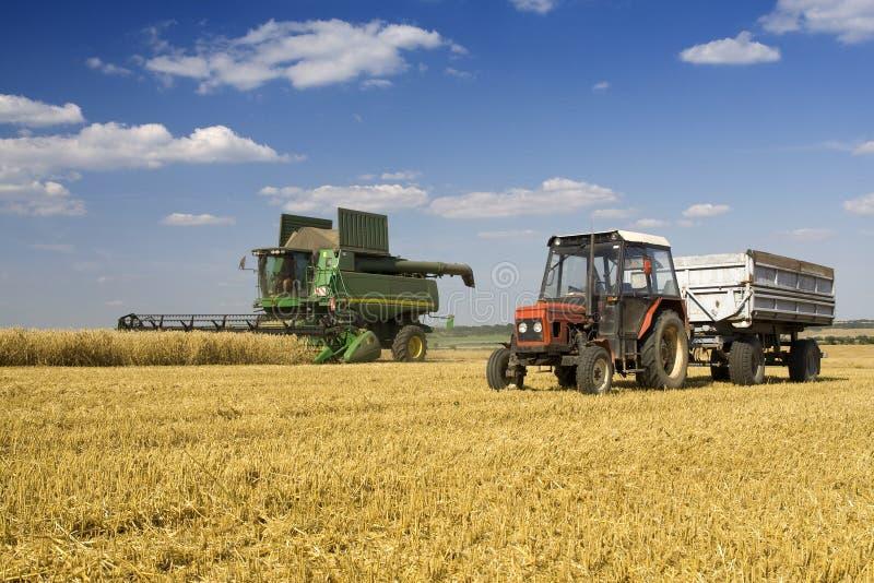 земледелие стоковая фотография