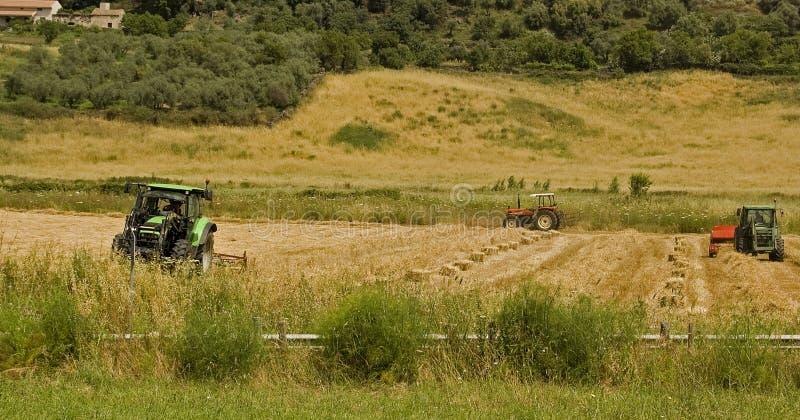 земледелие стоковые фото