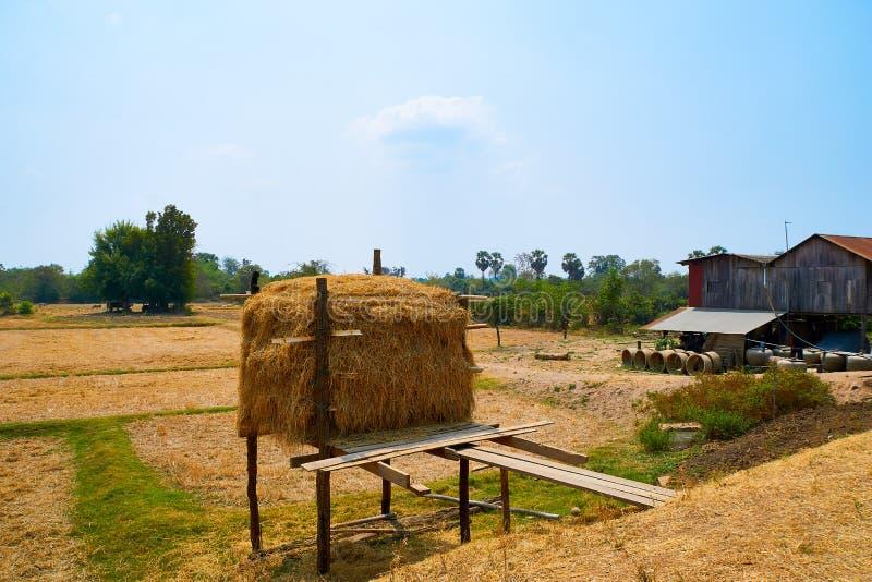 Земледелие Kratie ландшафта дерева шарика соломы, Камбоджа стоковая фотография
