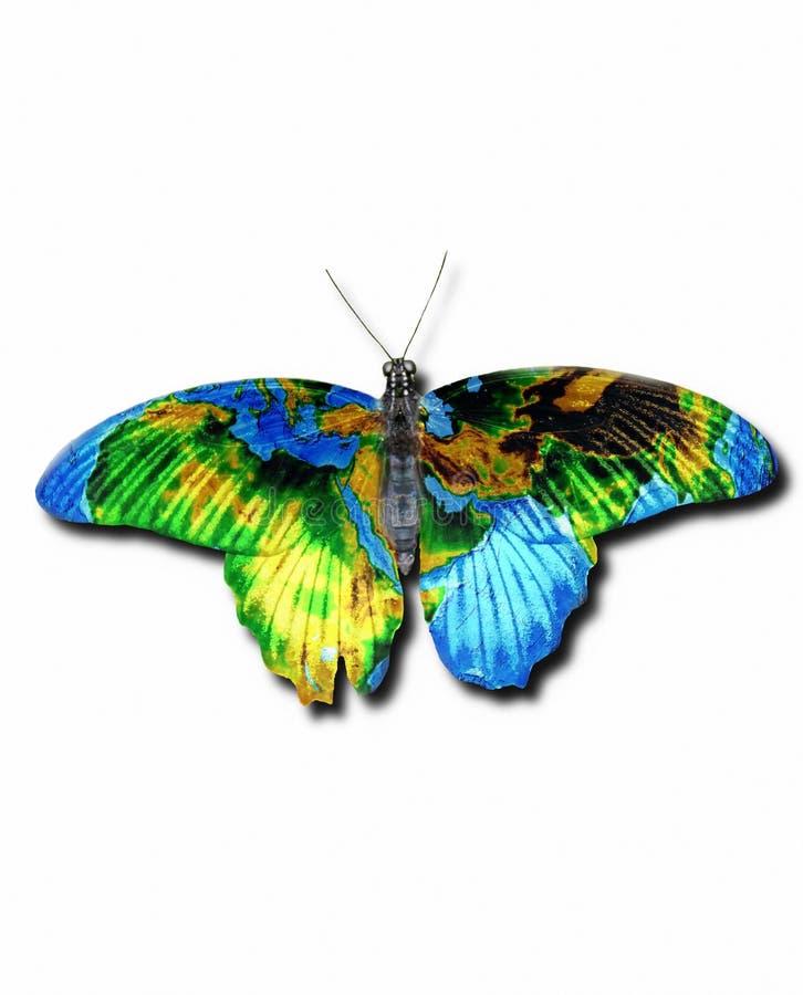 земля бабочки стоковое фото rf