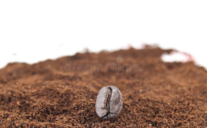 земля кофе фасоли стоковые изображения rf