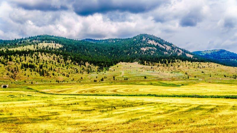 Земля ранчо в долине в Британской Колумбии, Канаде Nicola стоковая фотография