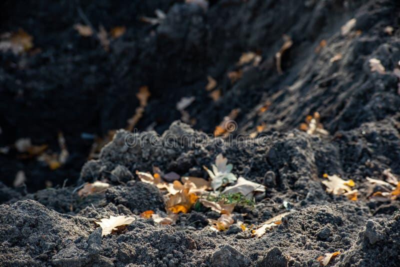 Земля раскопк с листьями осени сухими стоковые фото