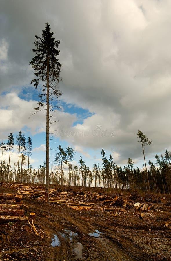 земля эксплуатируя мать стоковое изображение rf