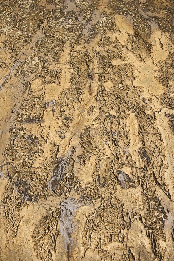 земля drydirt стоковая фотография rf