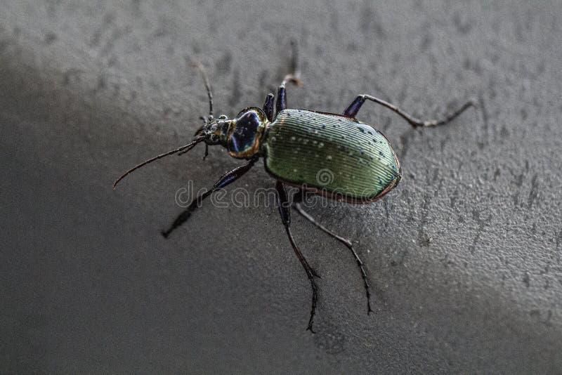 Земной жук стоковая фотография rf