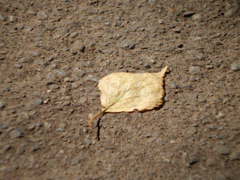 земные листья сиротливые стоковое изображение rf