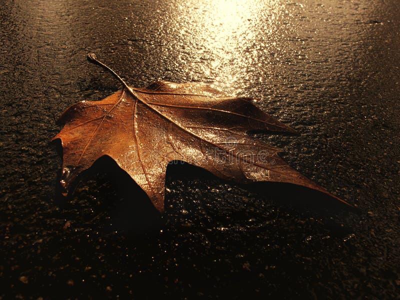 земные листья стоковое изображение