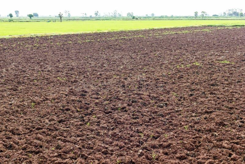 Землепашество почвы к выгону стоковое фото rf