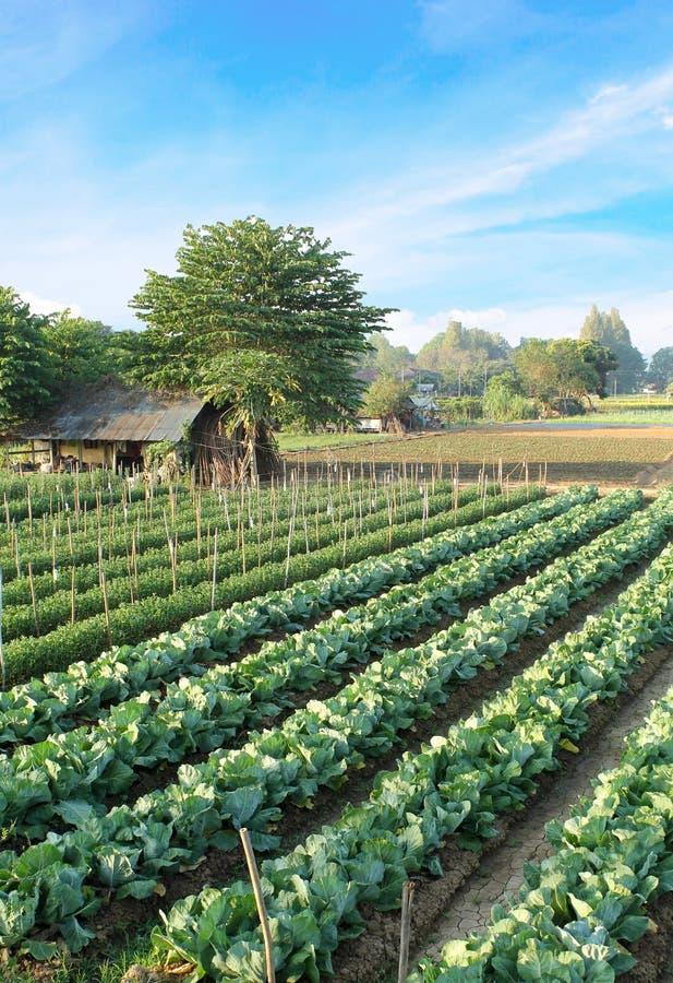 Download Земледелие к северу от Таиланда Стоковое Изображение - изображение насчитывающей farmland, напольно: 37930957
