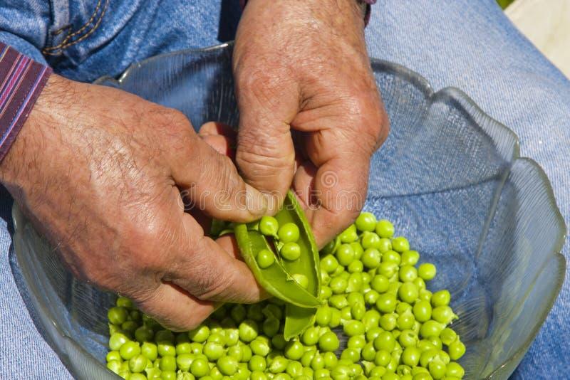 земледелие экологическое стоковые фотографии rf