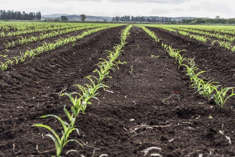 Земля земледелия зеленая стоковые фотографии rf
