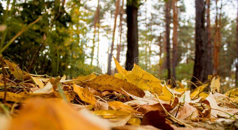 земля дня осени выходит солнечный стоковые изображения rf