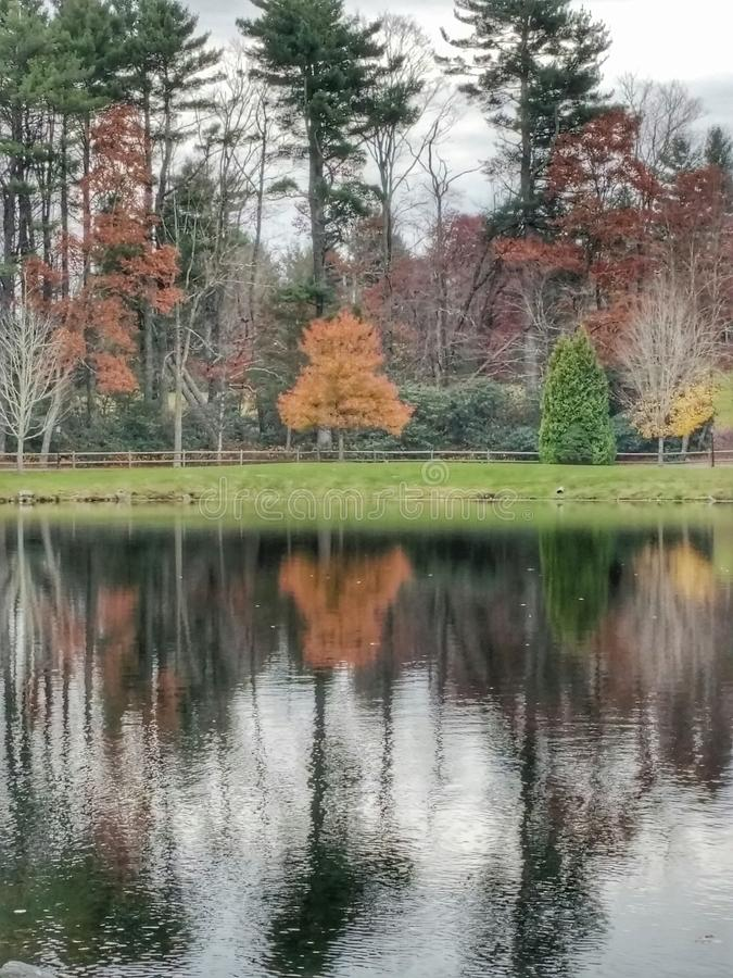 Зеркало берега озера стоковое фото