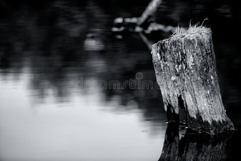 Зеркало на озере стоковая фотография