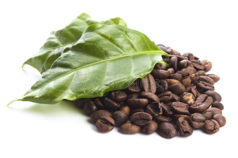 Зерна и листья кофе стоковое фото rf