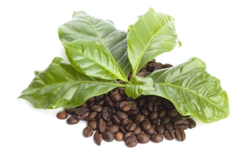 Зерна и листья кофе стоковые фотографии rf
