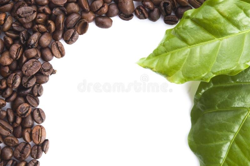 Зерна и листья кофе стоковые фото