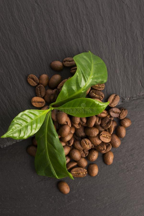 Зерна и листья кофе стоковые изображения