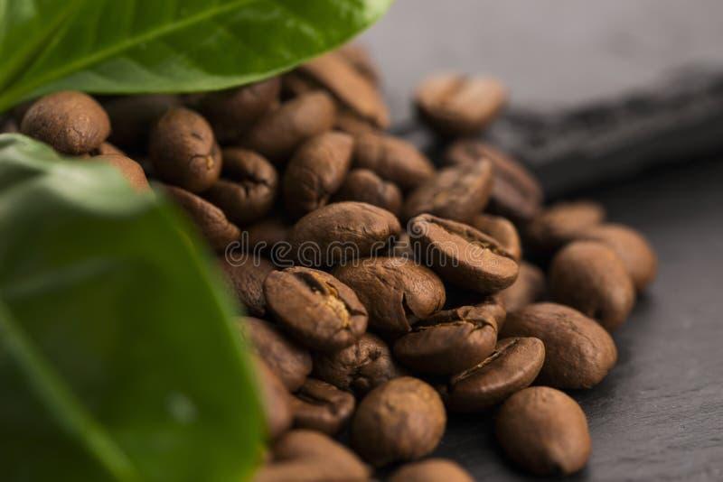 Зерна и листья кофе стоковая фотография rf
