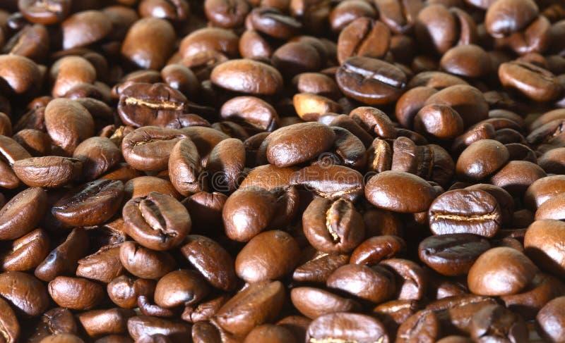 зерна кофе стоковое изображение