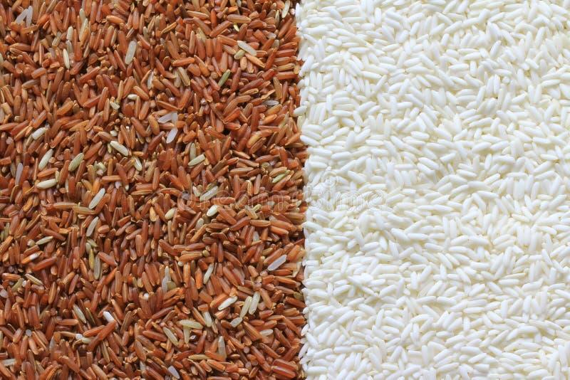 Зерна красного и белого риса стоковое фото