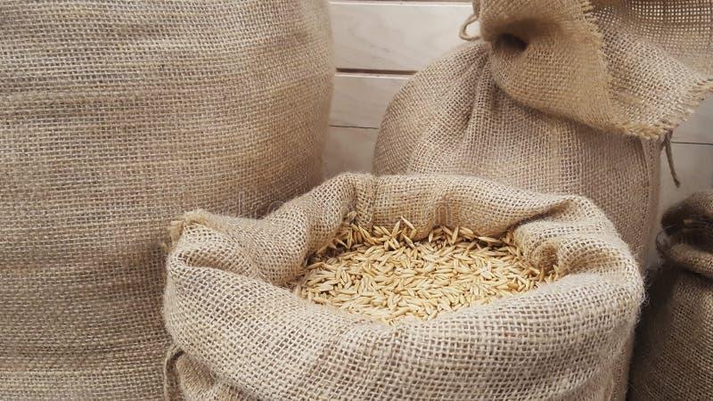 Зерна овса в мешочке из ткани, конце-вверх Зерна солода или пшеницы стоковые фотографии rf