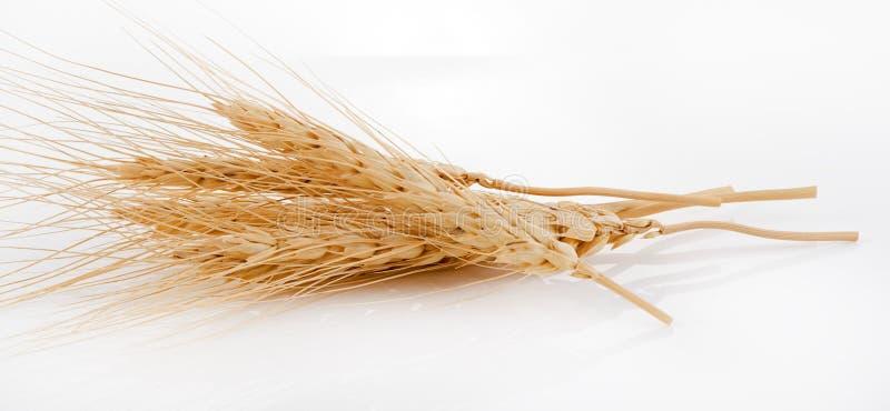 Зерна ячменя ветроуловитель изолированный на белой предпосылке стоковая фотография rf