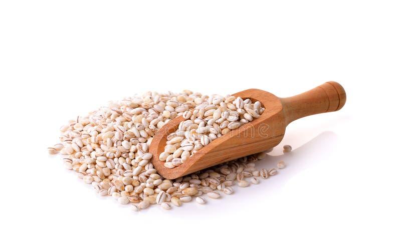 Зерна ячменя на белой предпосылке стоковое изображение