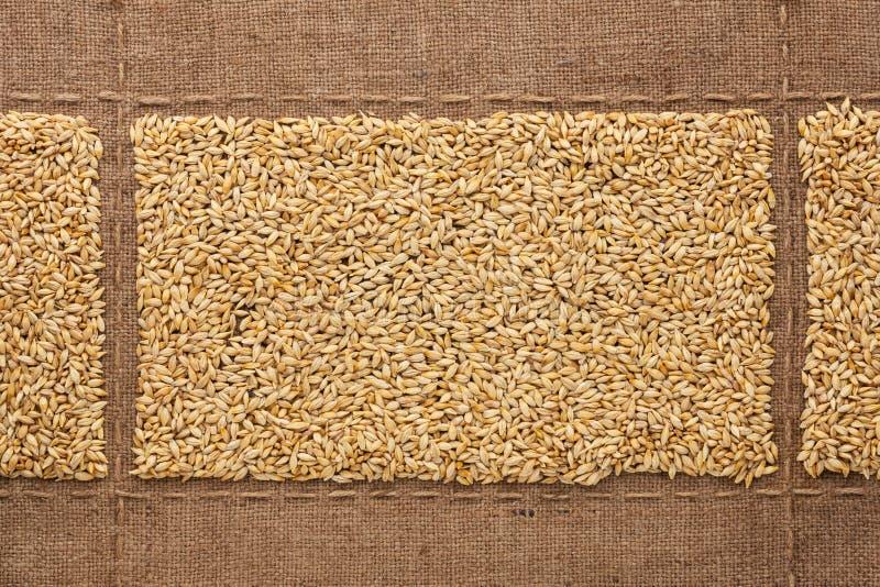 Зерна ячменя на дерюге, с местом для вашего текста стоковое фото