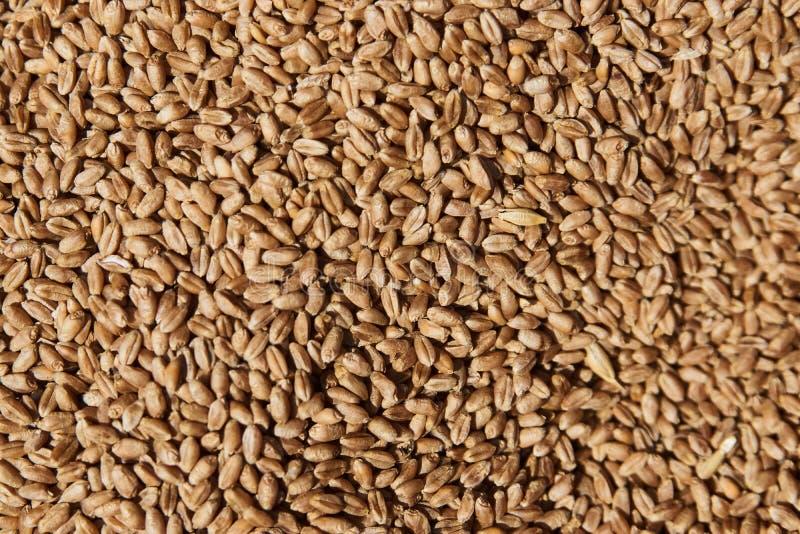 Зерна Rye, поверхность и предпосылка, конец-вверх Еда и земледелие стоковое изображение rf